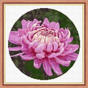 "Chrysanthemums in Purple & Pink Flowers - 14 Count Cross Stitch 10"" Circular"