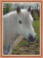 Horse / Pony Cross Stitch Designs